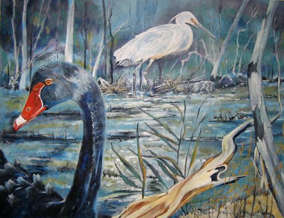 Black Swan, Billabong at Aireys